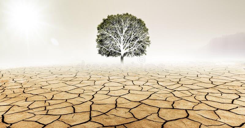 Arbre dans le désert sec images stock