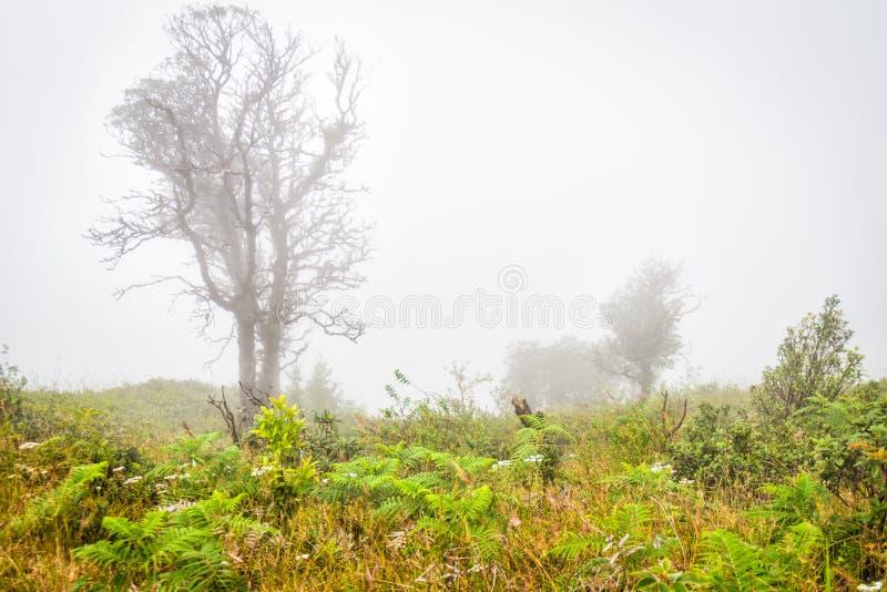 Arbre dans le domaine d'herbe avec tôt brumeux photo stock