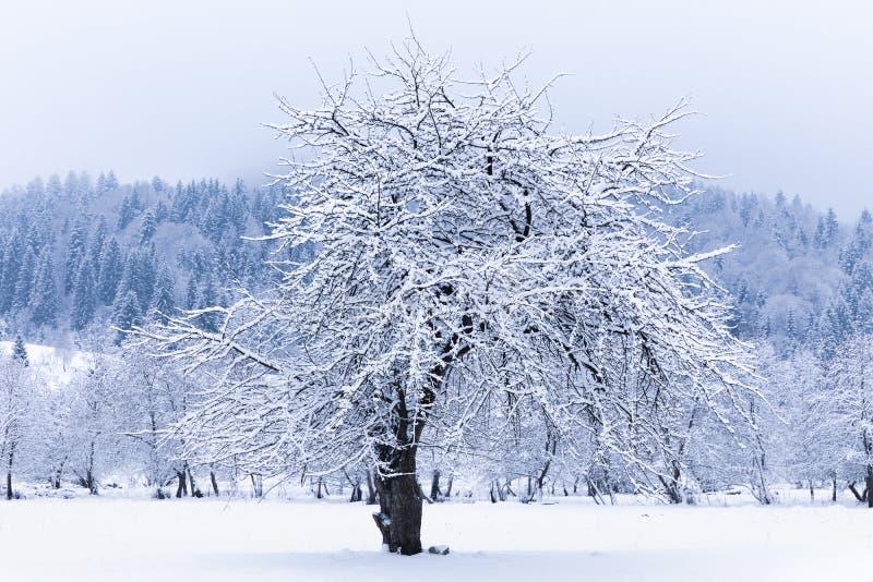 Arbre dans le domaine de neige photo stock