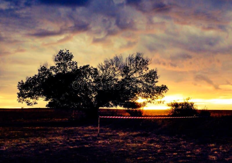 Arbre dans le domaine ouvert pendant le lever de soleil photos libres de droits