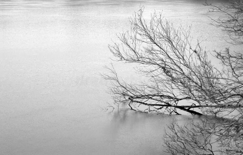 Arbre dans le lac figé photo stock