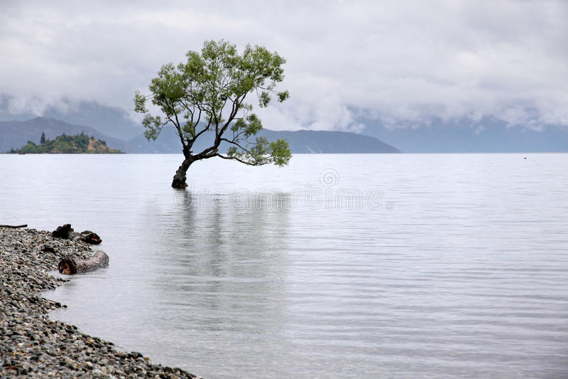 Arbre dans le lac Wanaka image stock