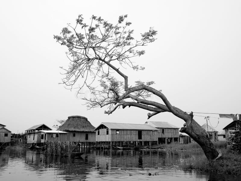 Arbre dans le village Bénin de bord de lac photographie stock