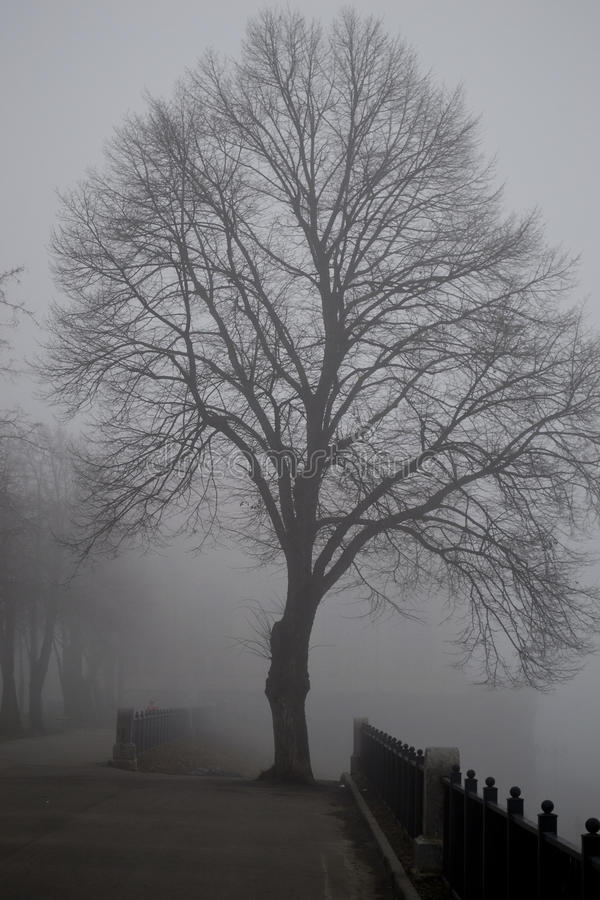 Arbre dans un brouillard photos stock