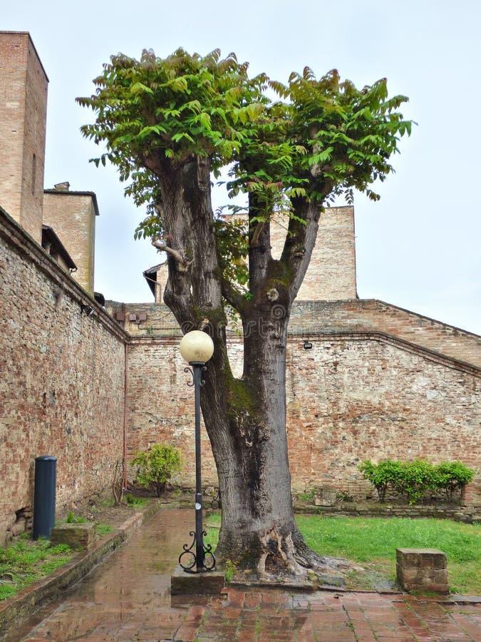 Arbre dans un jardin de la ville italienne de colline de Certaldo Jour pluvieux images stock