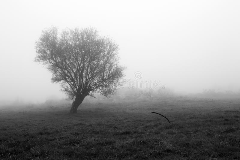 Arbre dans un matin brumeux image libre de droits