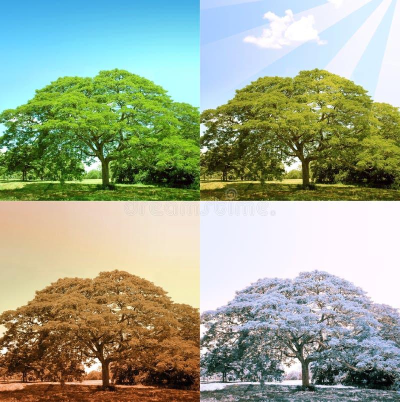 arbre de 4 saisons photos stock