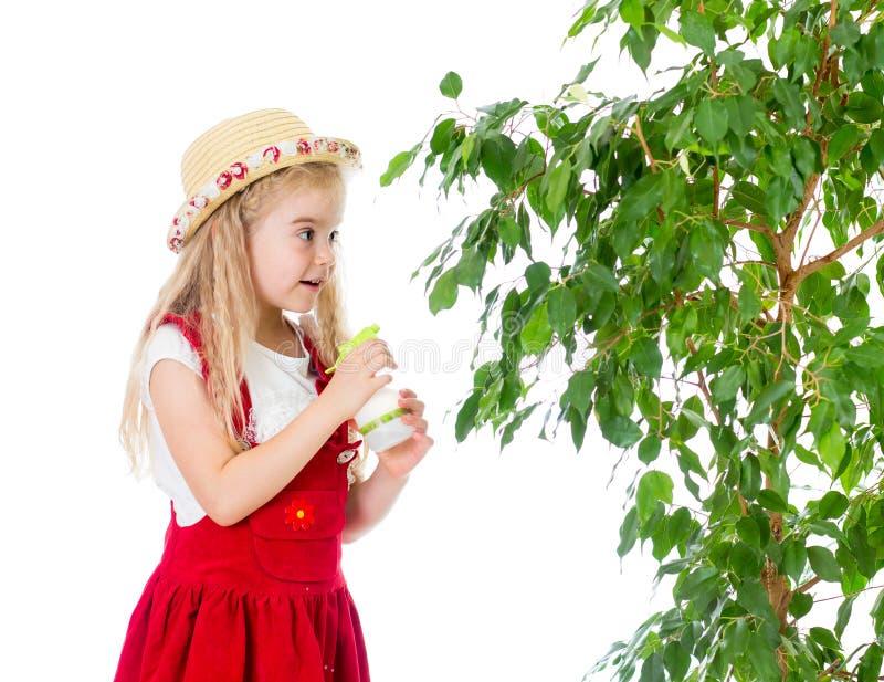 Arbre de arrosage d'enfant de jardinier image stock
