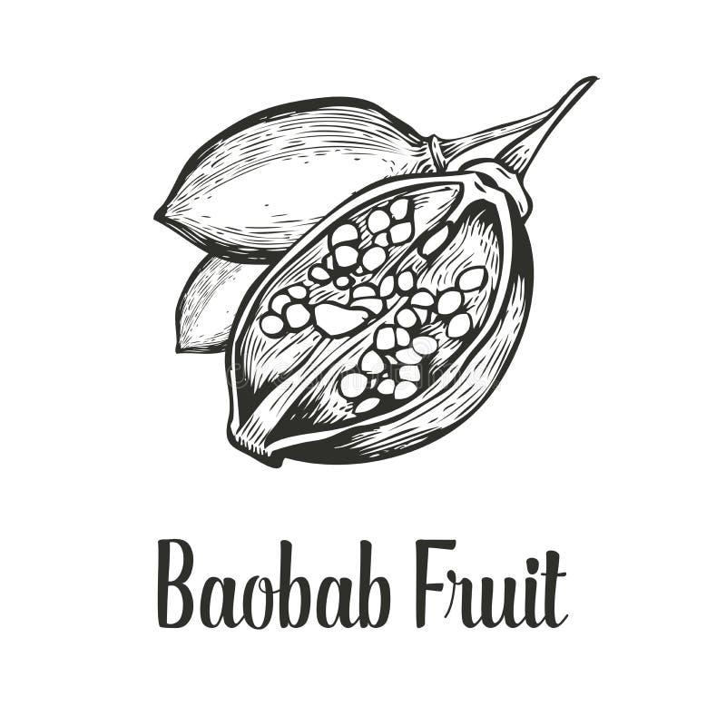 Arbre de baobab, fruit, illustration tirée par la main de vecteur de croquis de vintage de gravure d'écrou Noir sur le fond blanc photo libre de droits
