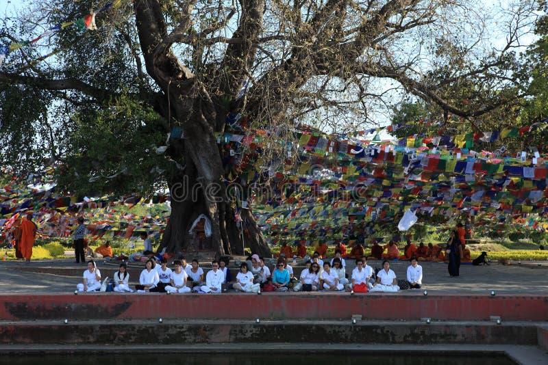 Arbre de Bodhi en lieu de naissance de Lumbini Bouddha photographie stock libre de droits