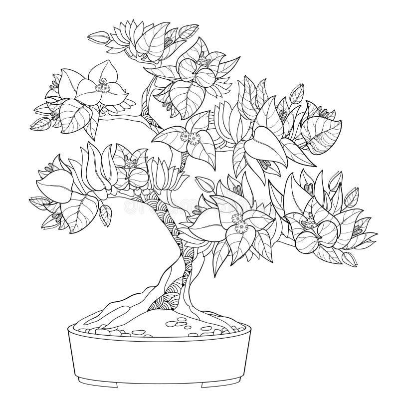 Arbre de bonsaïs de bouganvillée ou de Buganvilla d'ensemble de vecteur dans le pot de fleurs avec la fleur, la feuille et le bou illustration libre de droits