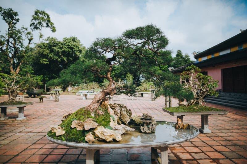 arbre de bonsaïs et étang décoratif photos libres de droits
