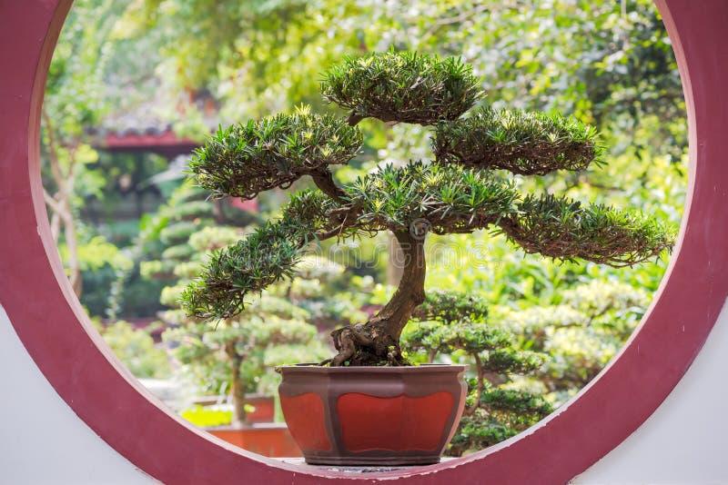Arbre de bonsaïs sur une fenêtre circulaire photo stock
