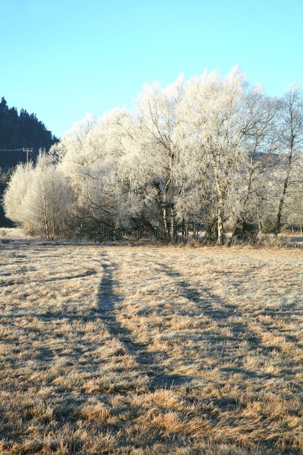 Arbre de bouleau dans la gelée et la neige photo stock