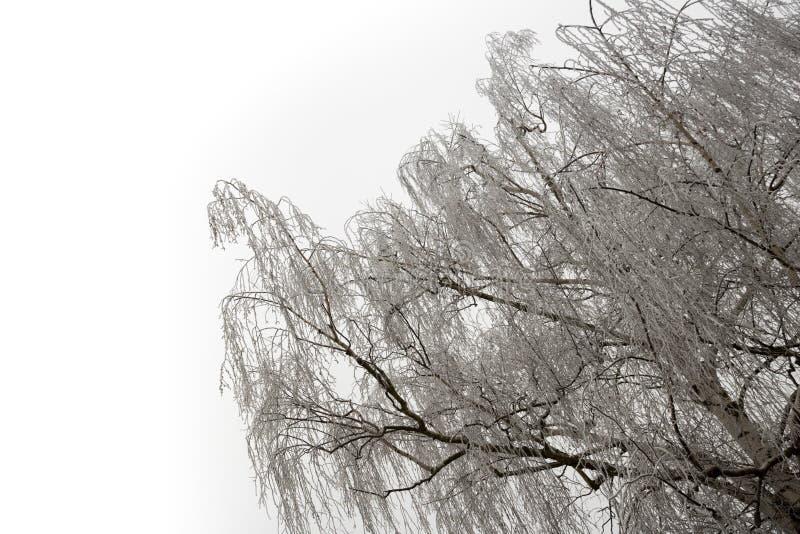 Arbre de bouleau givré dans le ciel léger en hiver images stock