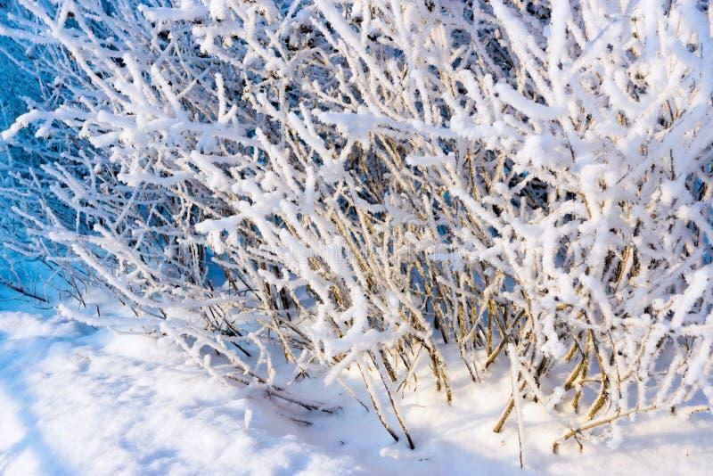 Arbre de branches avec la neige et les cristaux blancs pelucheux de la gelée image stock