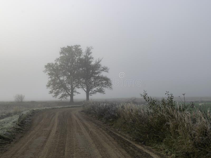 Arbre de brume dans le brouillard image libre de droits