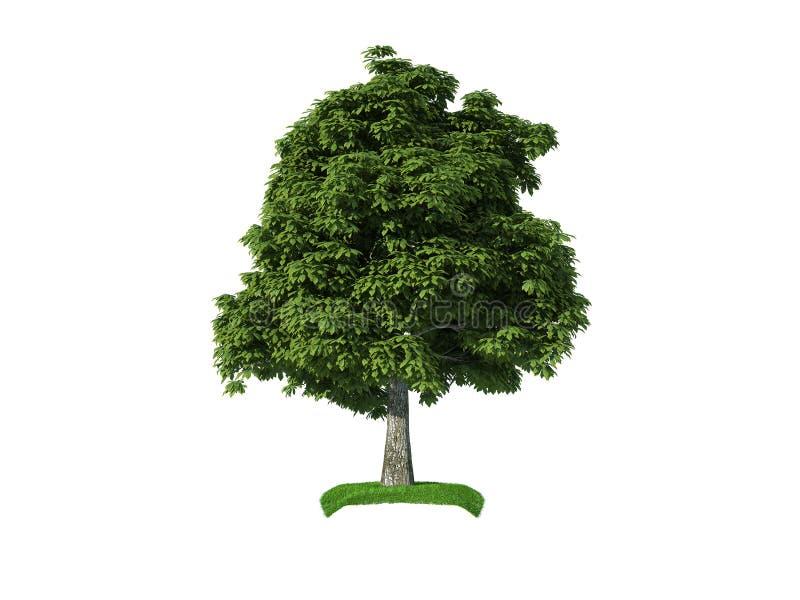arbre de châtaigne 3d illustration libre de droits