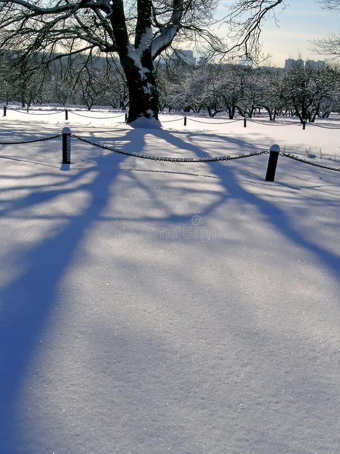 Download Arbre de chêne en hiver photo stock. Image du ciel, glace - 45352916