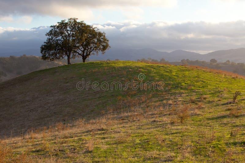 Arbre de chêne idyllique en lumière du soleil de soirée image stock