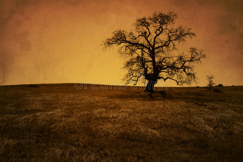 Arbre de chêne nu grunge antique photo libre de droits