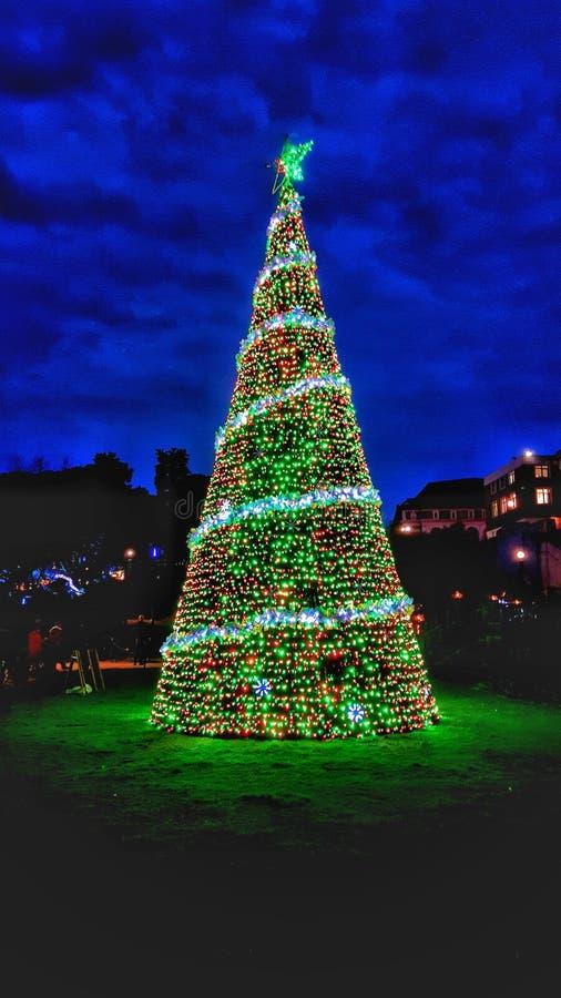 Arbre de Christmass aux jardins de Bournemouth image libre de droits
