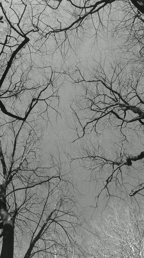 Arbre de ciel photographie stock libre de droits