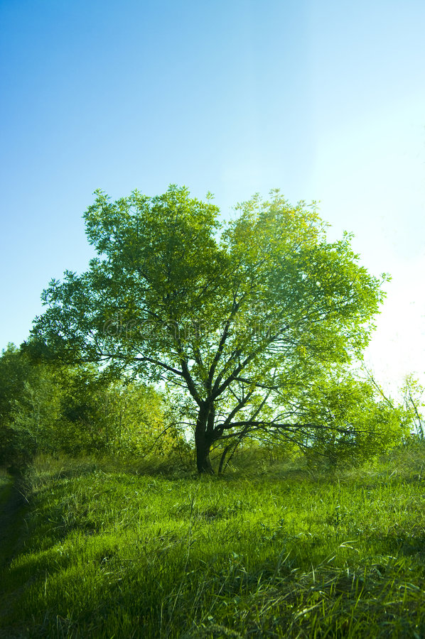 arbre de ciel photo libre de droits
