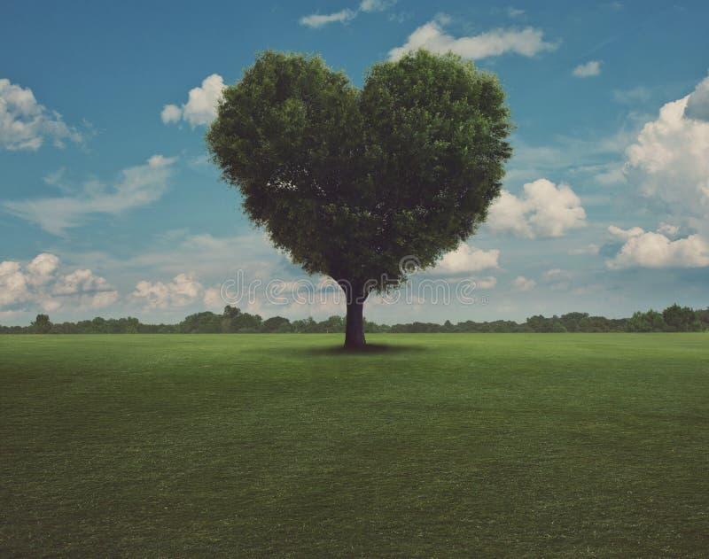 Arbre de coeur photo libre de droits