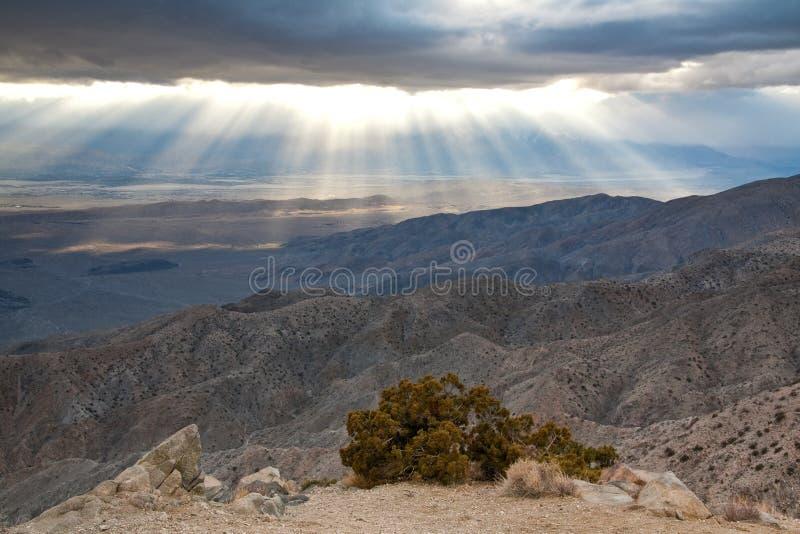arbre de coucher du soleil de joshua photo libre de droits
