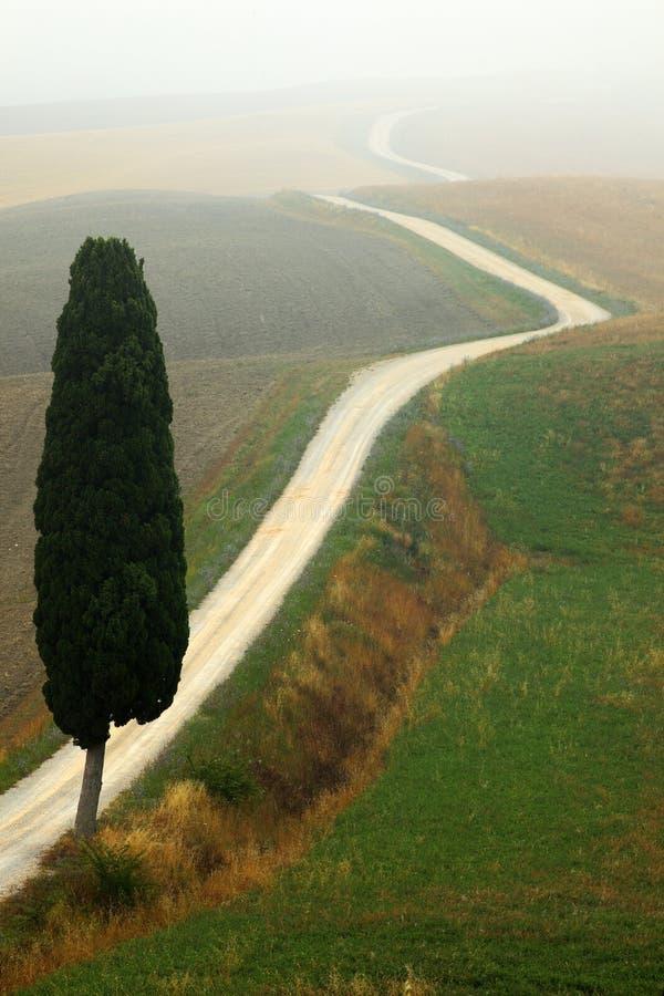 Arbre de cyprès solitaire avec le gravier rad en brouillard de matin, Toscane, Italie photo stock