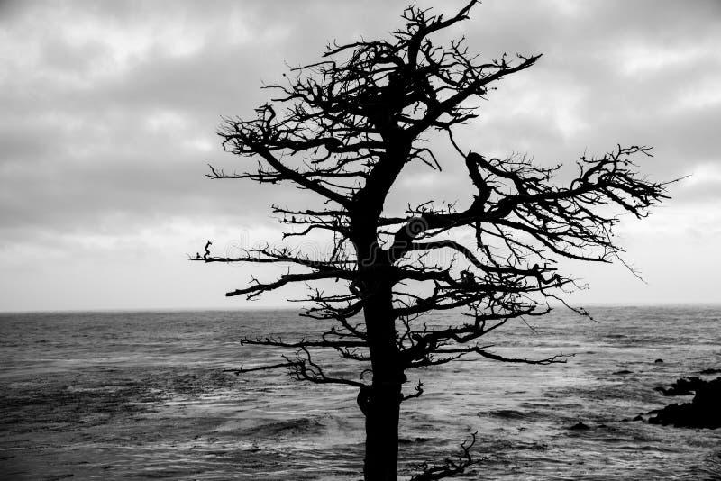 Arbre de Cypress image libre de droits
