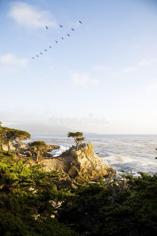 Arbre de Cypress solitaire photos stock