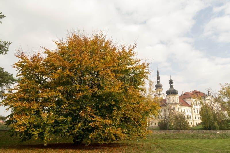Arbre de danse dans des couleurs d'automne image libre de droits