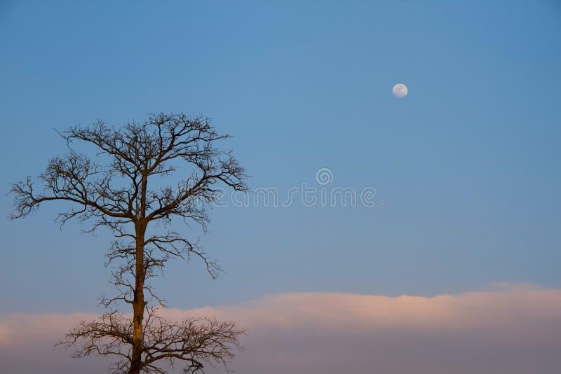 Arbre de Deat et la lune images stock