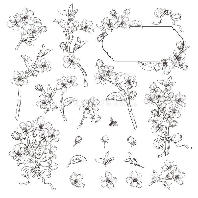 arbre de floraison Le m?ga a plac? la collection Branches botaniques tir?es par la main de fleur sur le fond blanc Illustration d illustration stock