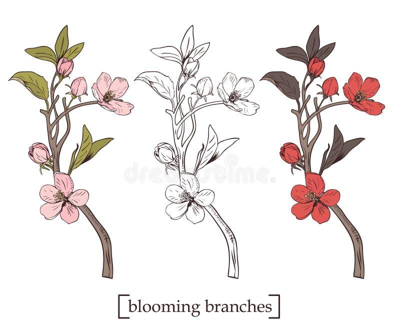 arbre de floraison Placez la collection Branches botaniques tirées par la main de fleur sur le fond blanc Illustration de vecteur illustration stock