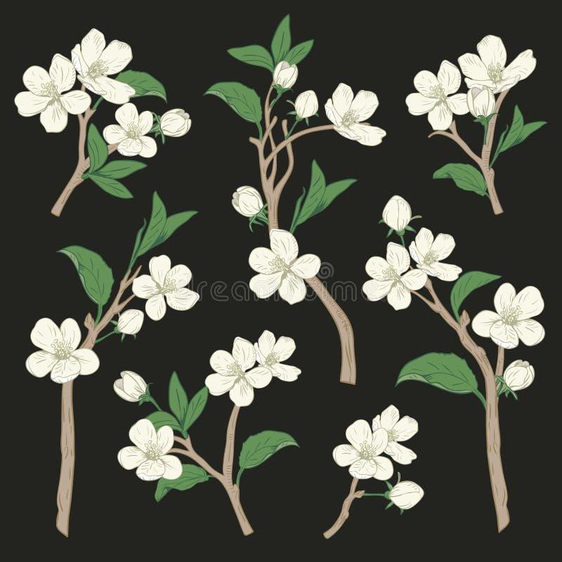 arbre de floraison Placez la collection La fleur blanche botanique tirée par la main s'embranche sur le fond noir Illustration de illustration libre de droits