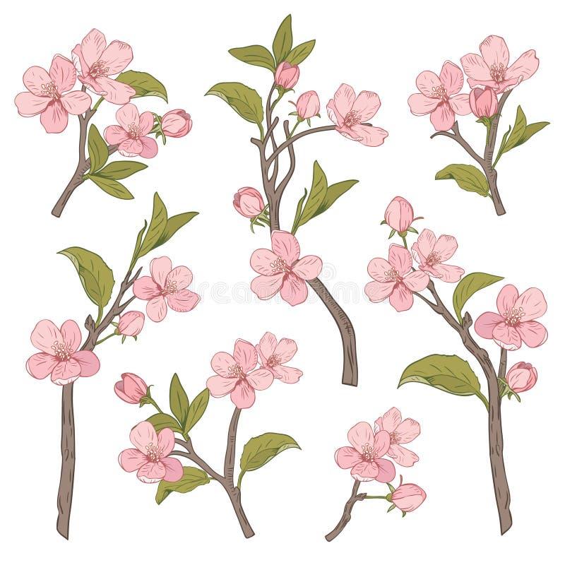 arbre de floraison Placez la collection La fleur rose botanique tirée par la main s'embranche sur le fond blanc Illustration de v illustration libre de droits