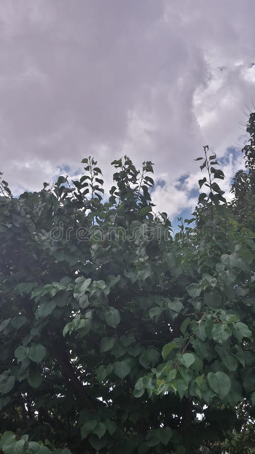 Arbre de germination photographie stock