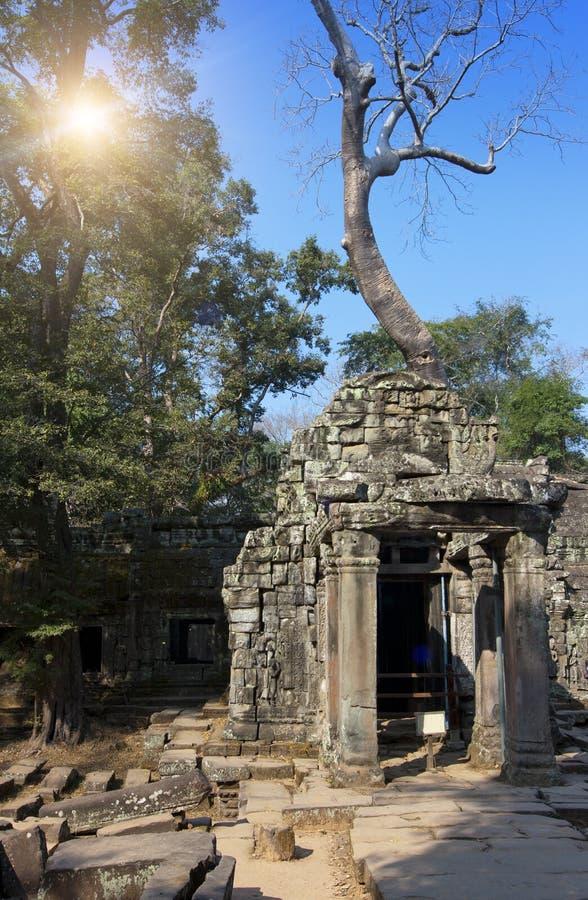 Arbre de jungle couvrant les pierres des ruines de temple en Angkor Wat Siem Reap, Cambodge, 12ème siècle images libres de droits