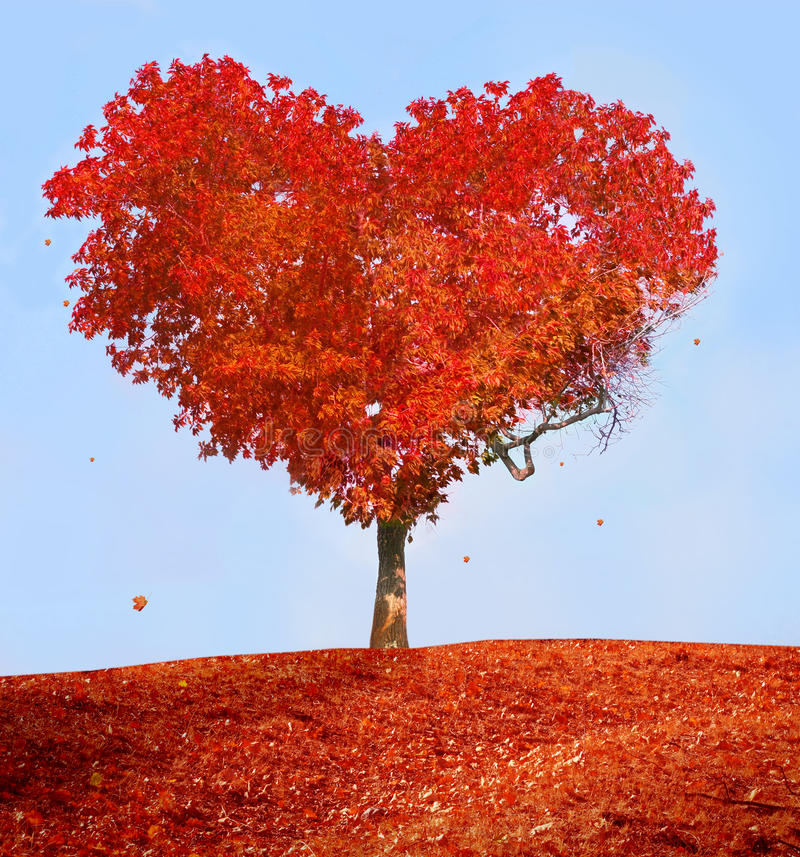 Arbre de l'amour photo stock