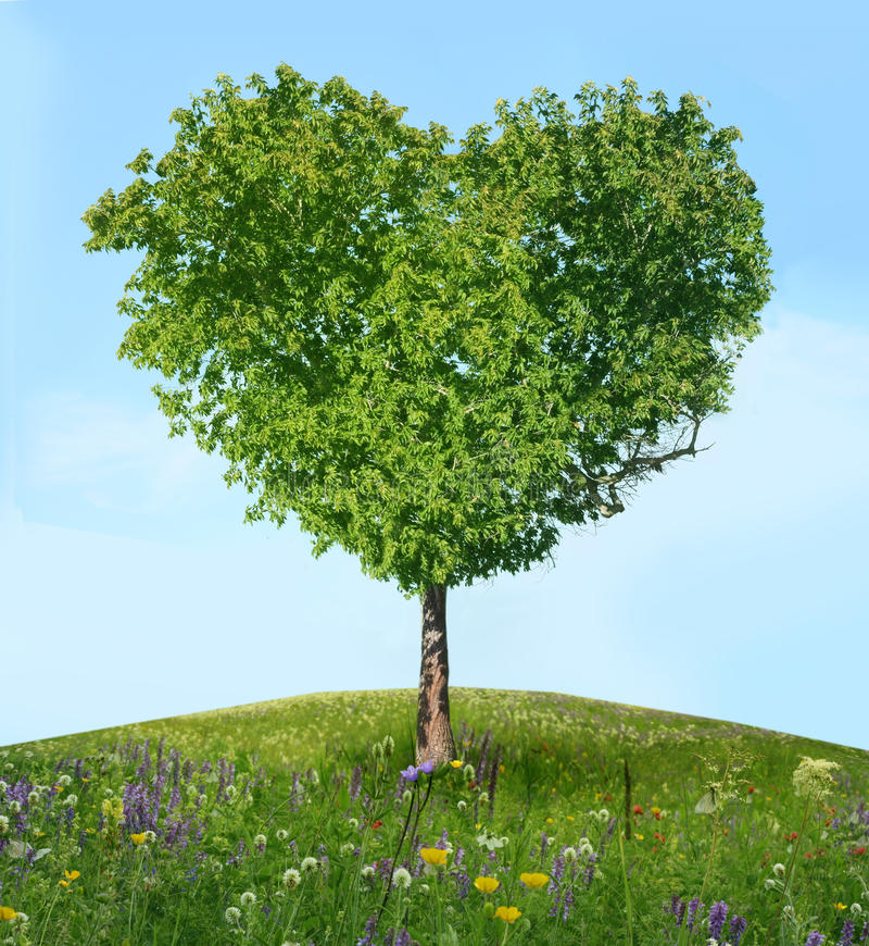 Arbre de l'amour images stock
