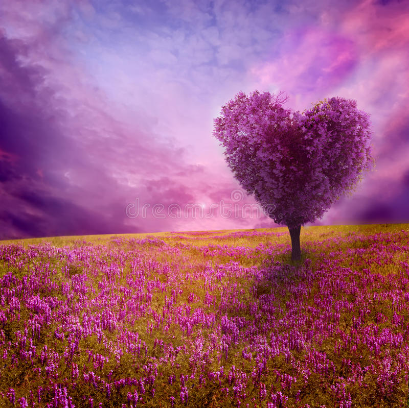 Arbre de l'amour photos libres de droits