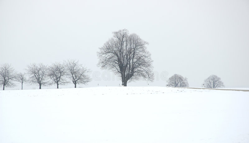 Download Arbre de l'hiver photo stock. Image du gris, neige, zone - 83168