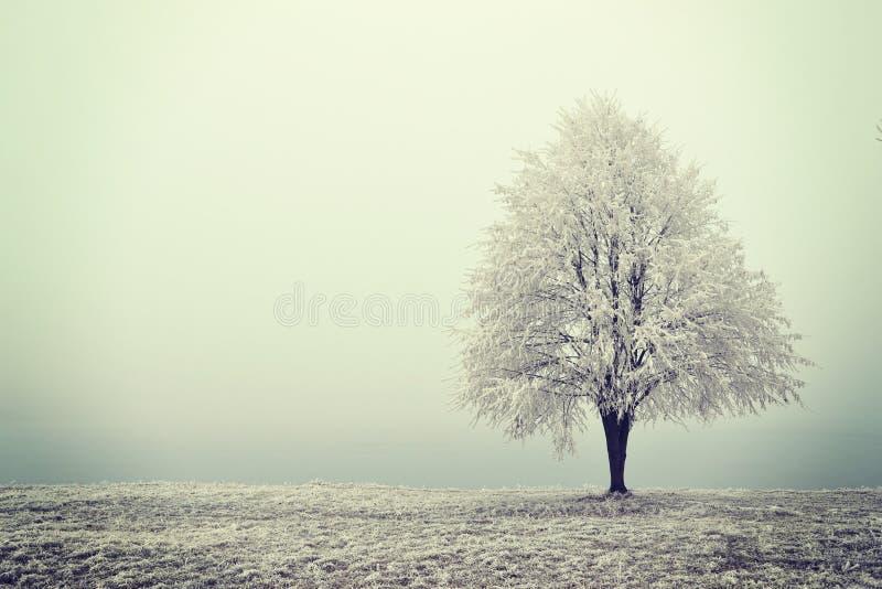 Arbre de l'hiver photo libre de droits