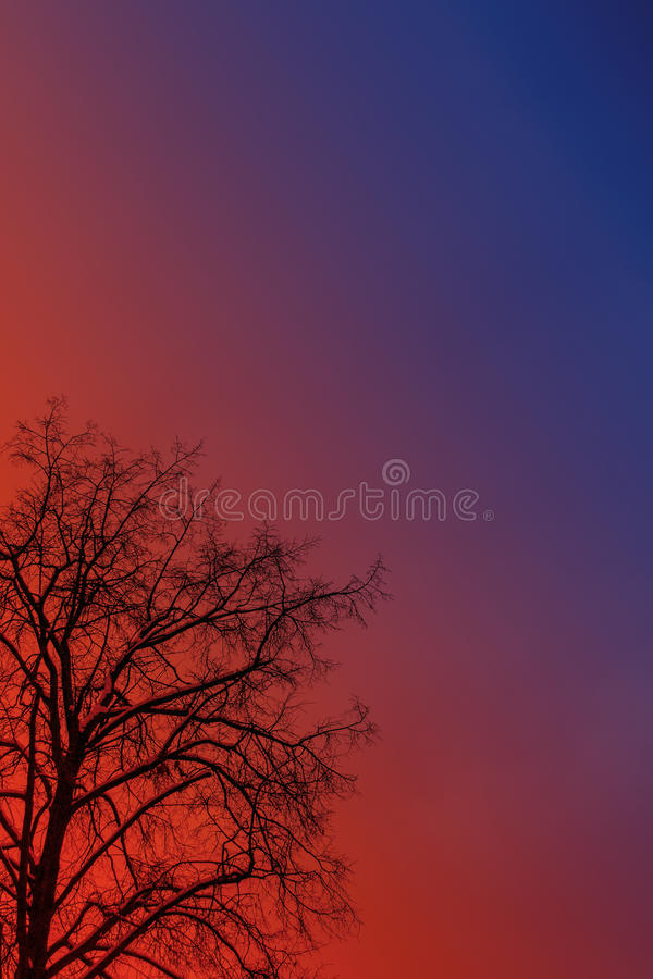 Arbre de l'hiver photo stock