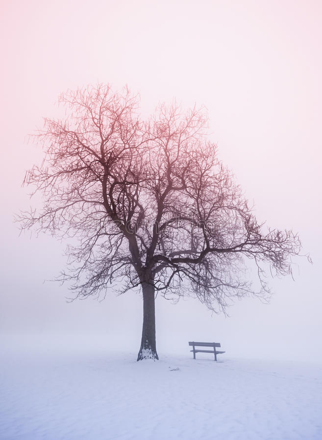 Arbre de l'hiver en regain au lever de soleil image stock