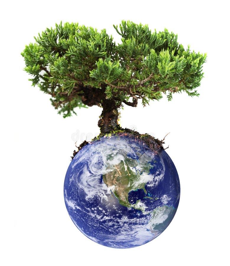 arbre de la terre photos stock