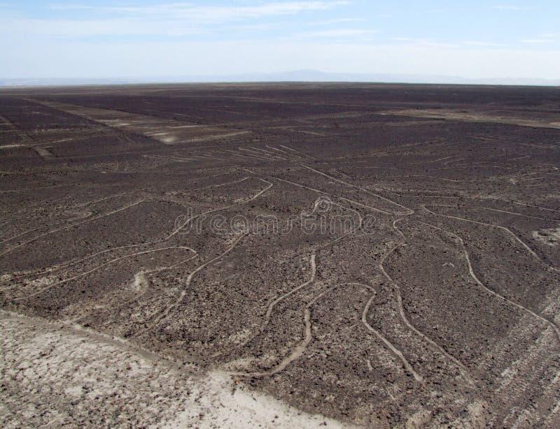 Arbre de la vie, lignes de Nazca image libre de droits